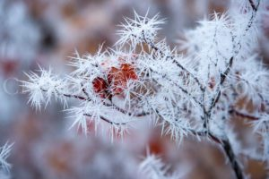 Ice crystals encrust a delicate branch in a fierce facade