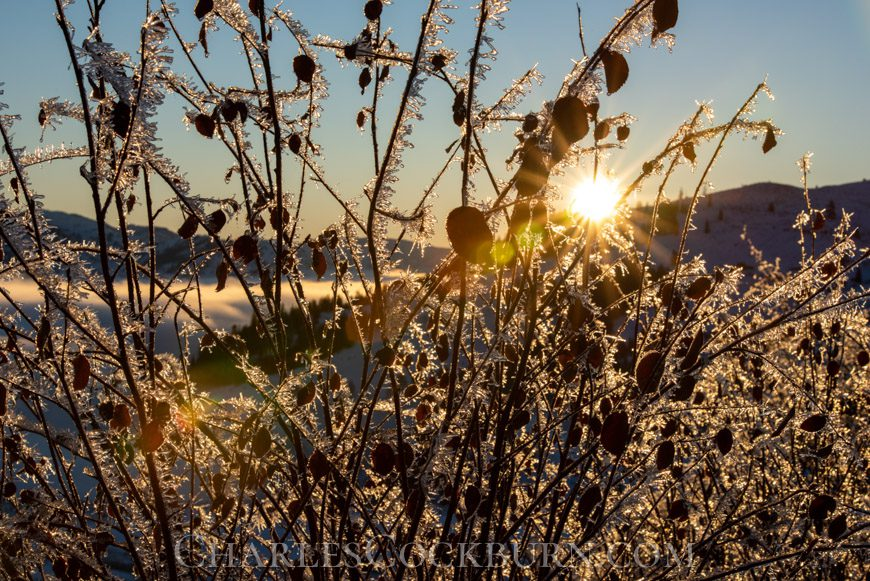 Morning sun shines through ice covered branches