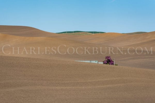 Purple flowers accent the brown rolling hills of The Palouse